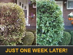Our Richmond Sprinkler Repairs take your yard from brown to green just one week later